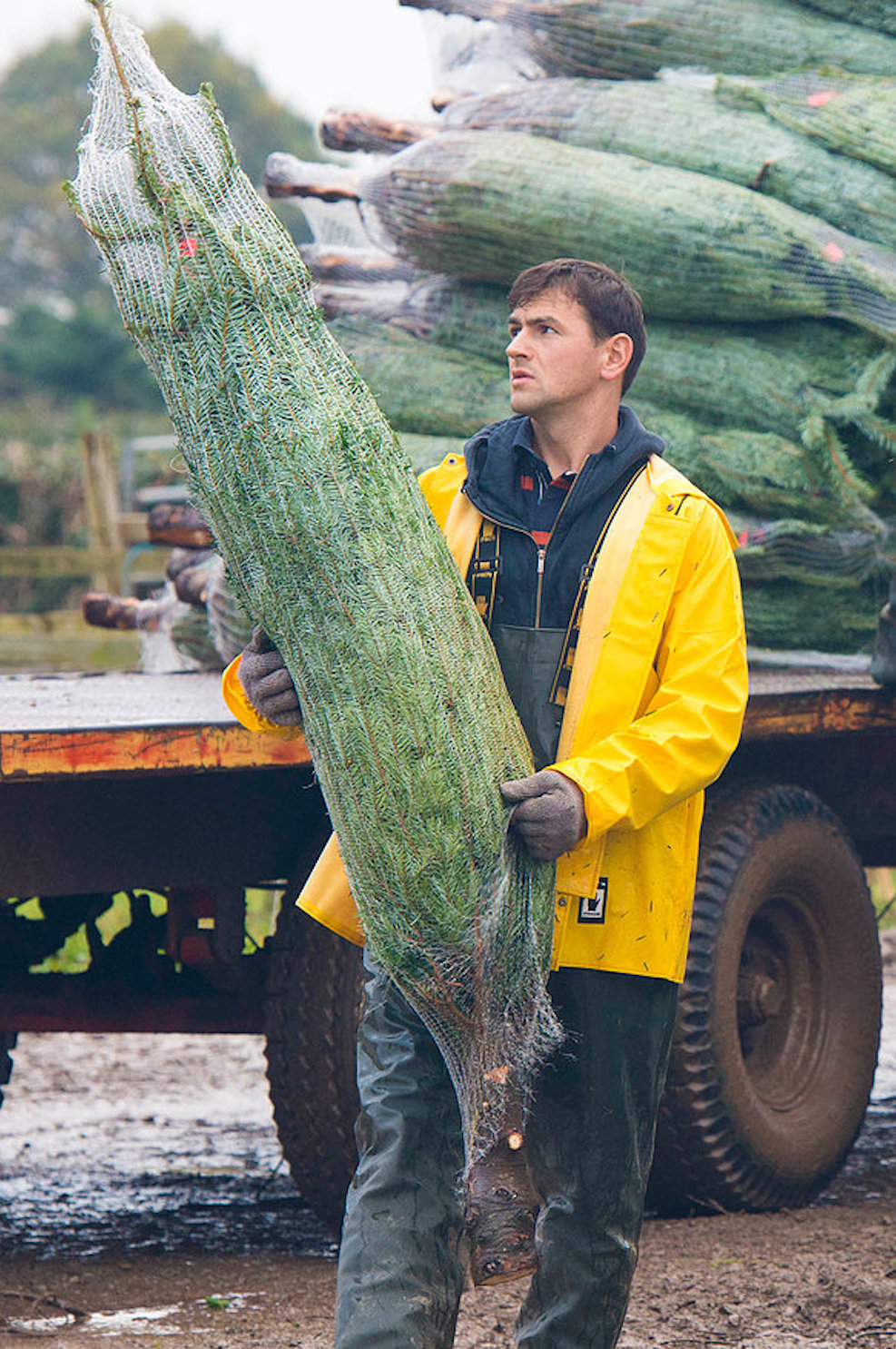 Christmas Trees Delivered To Your Door